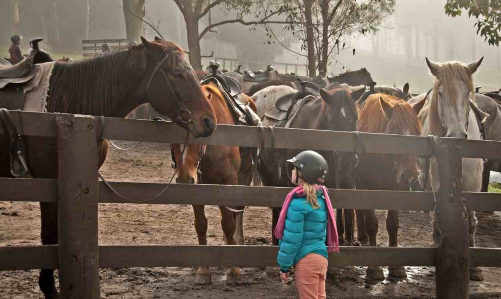 """Child Saying """"HI"""" to the Horse"""