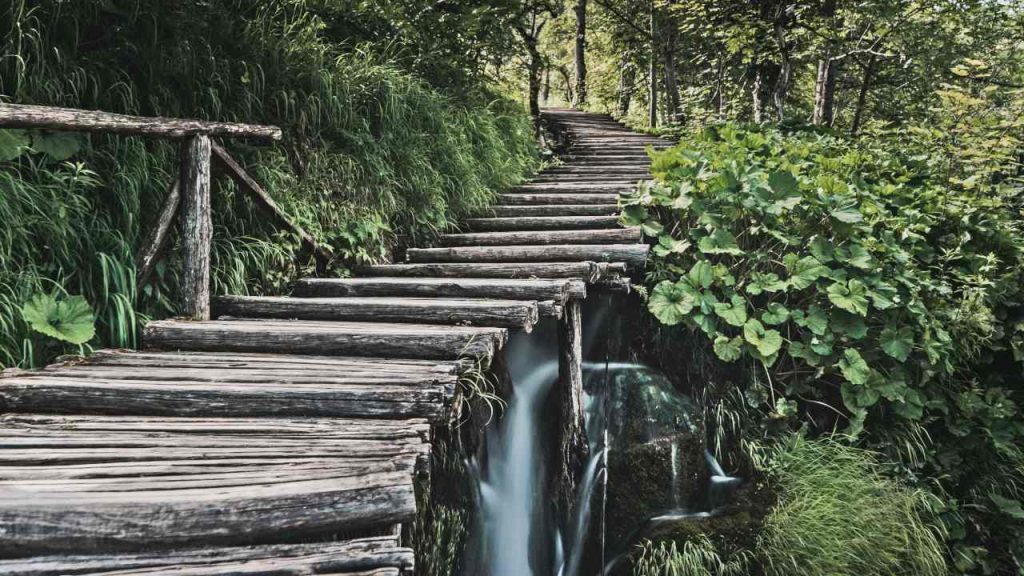 Old Logs Used to Make Stairs