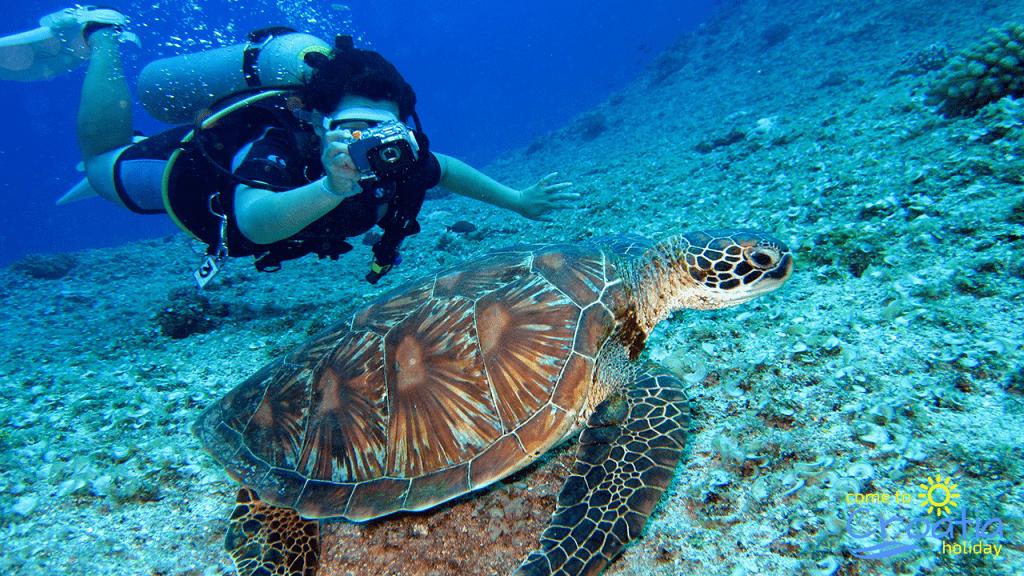 Diving - Sea Turtle