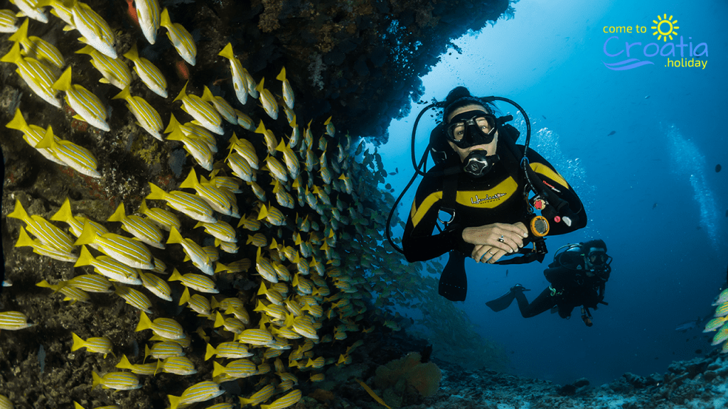 Diver in the sea next to a group of fish