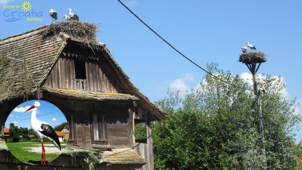 Čigoč Stork Village