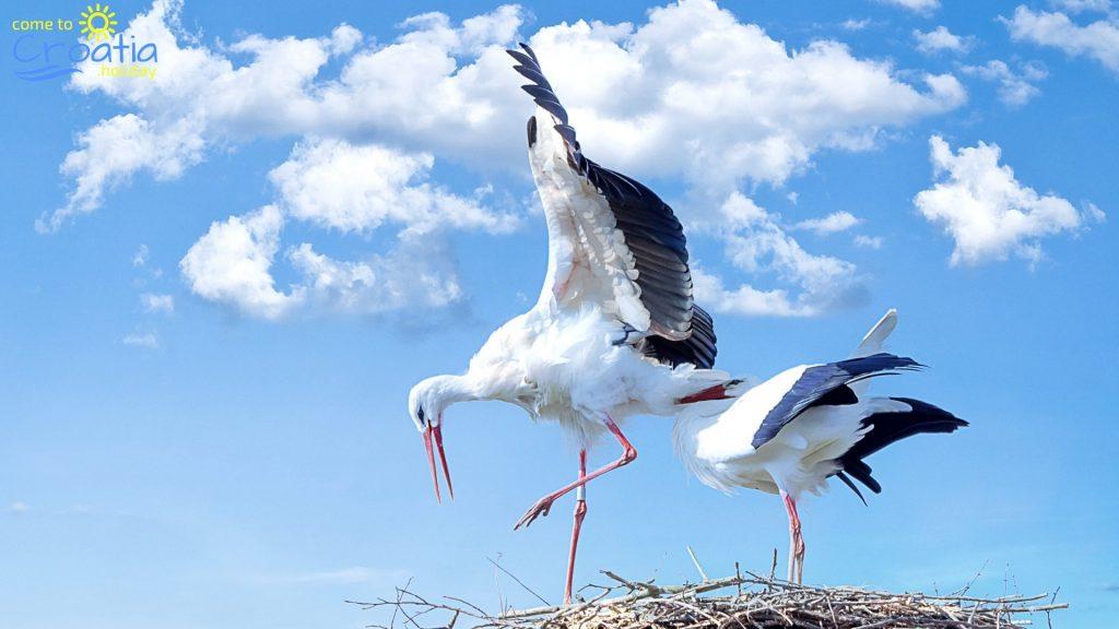 Beautiful Storks