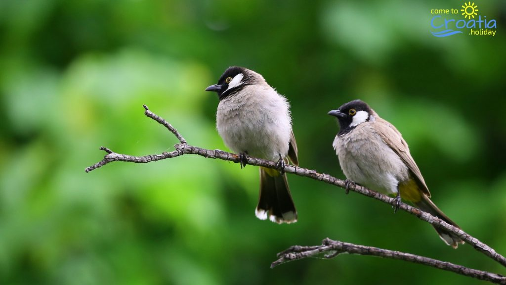 Nature Park - Kopački Rit