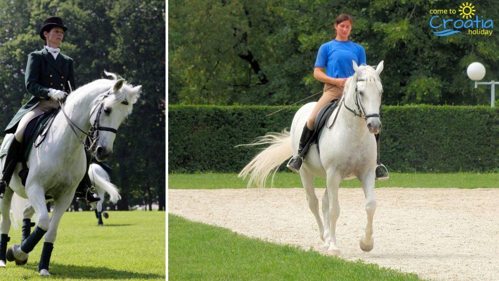 Lipizzan Horse riding